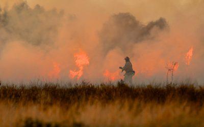 Bushfire Emergency Planning for Pets
