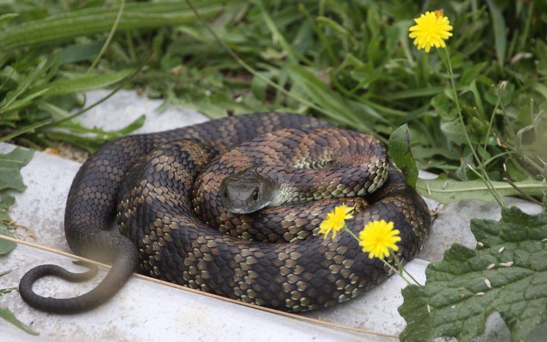Beware of snakes!