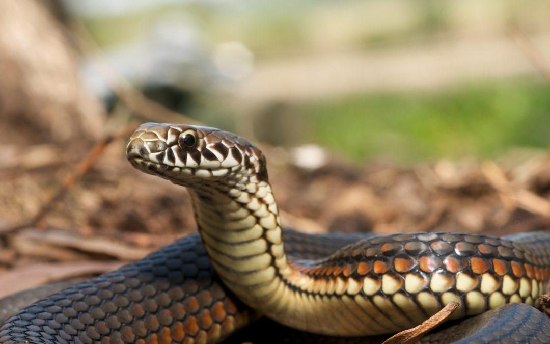 Brave Rory – Snake Bite Survivor