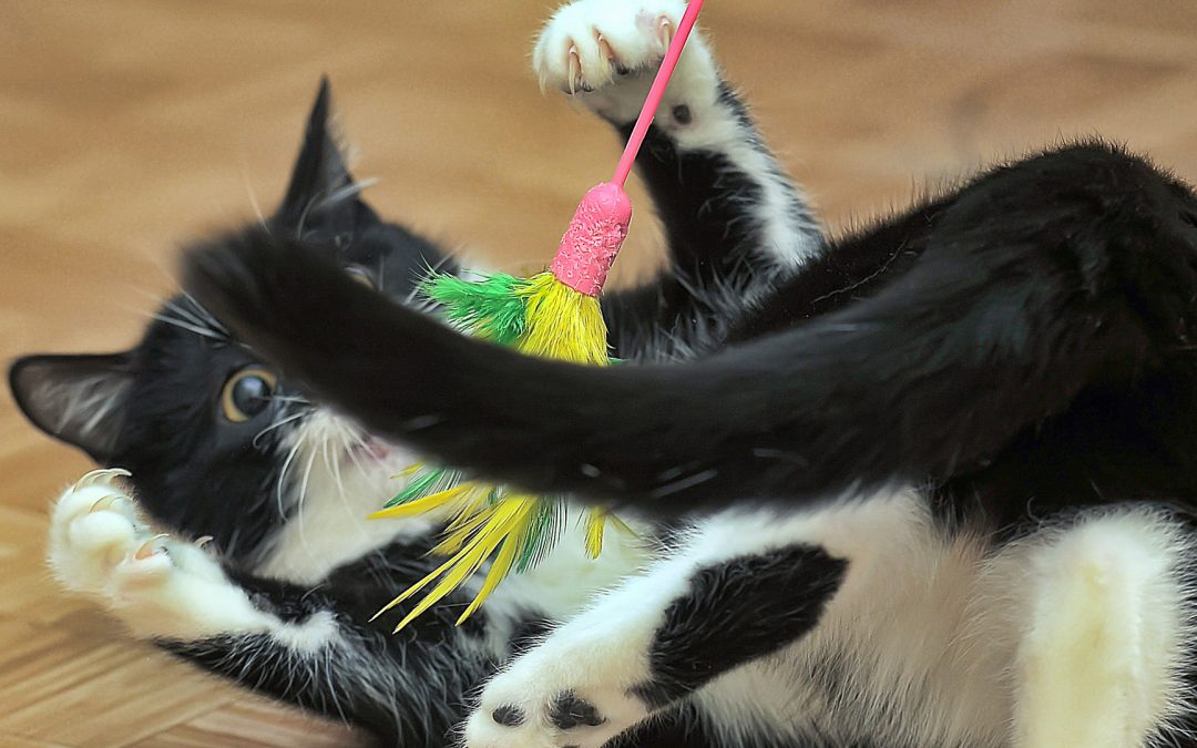 Fun Exercises to Keep Your Pet Trim