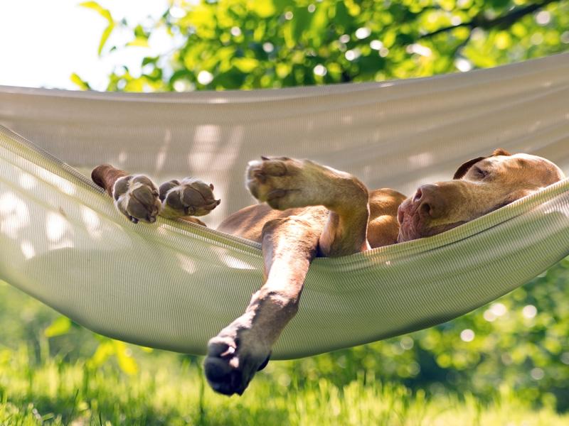 Summer Heat Tips