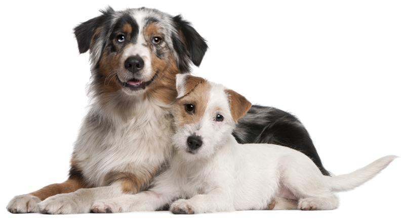 Dogs | Fur Life Vet