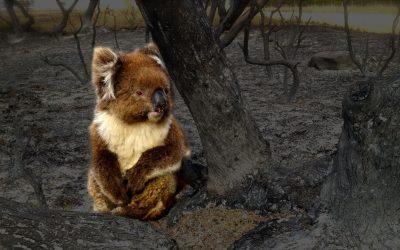 2020 Fur Life Foundation Bushfire Appeal