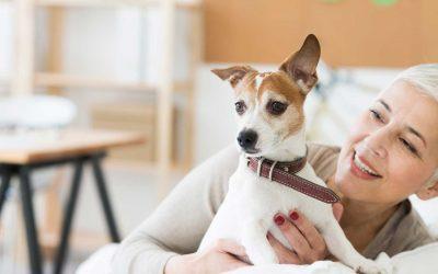 Pre-Winter check-ups for senior pets