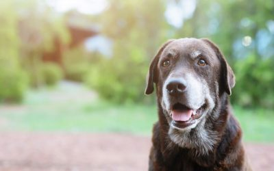 Osteoarthritis and your pet