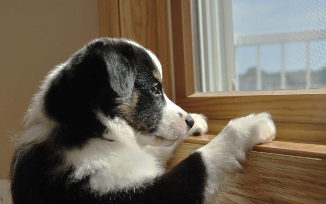 Pets post lockdown
