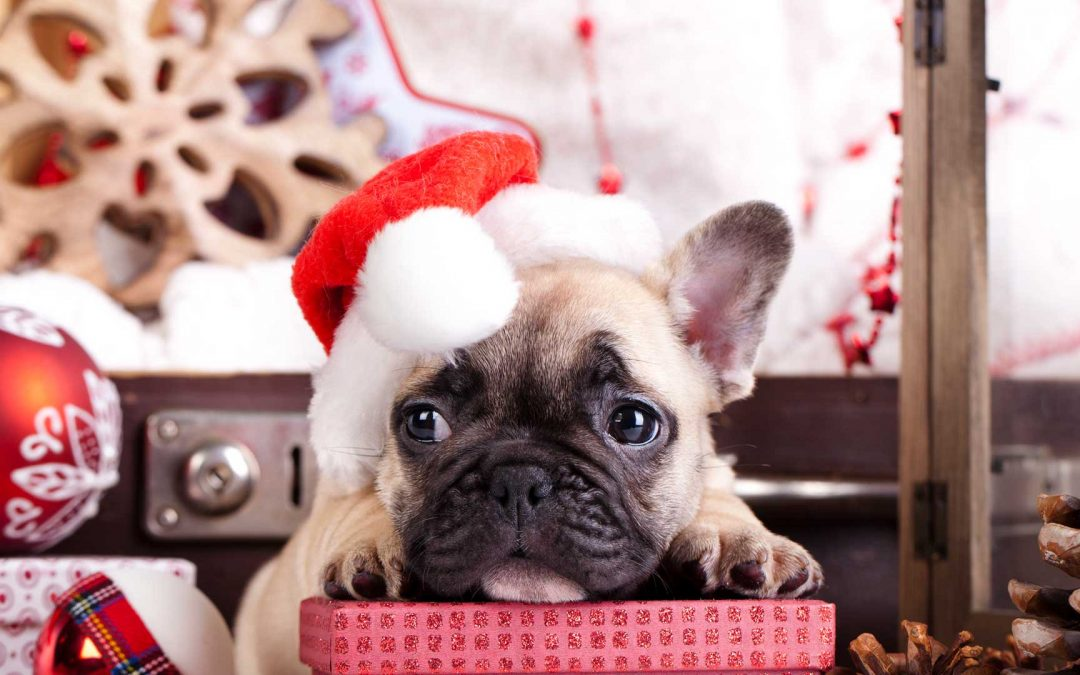Christmas Dangers for Inquisitive Pets!