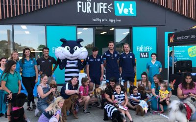 Fur Life Vet Torquay Open Day