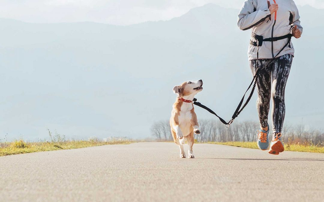 Don't get cooped up — Winter exercising with your dog