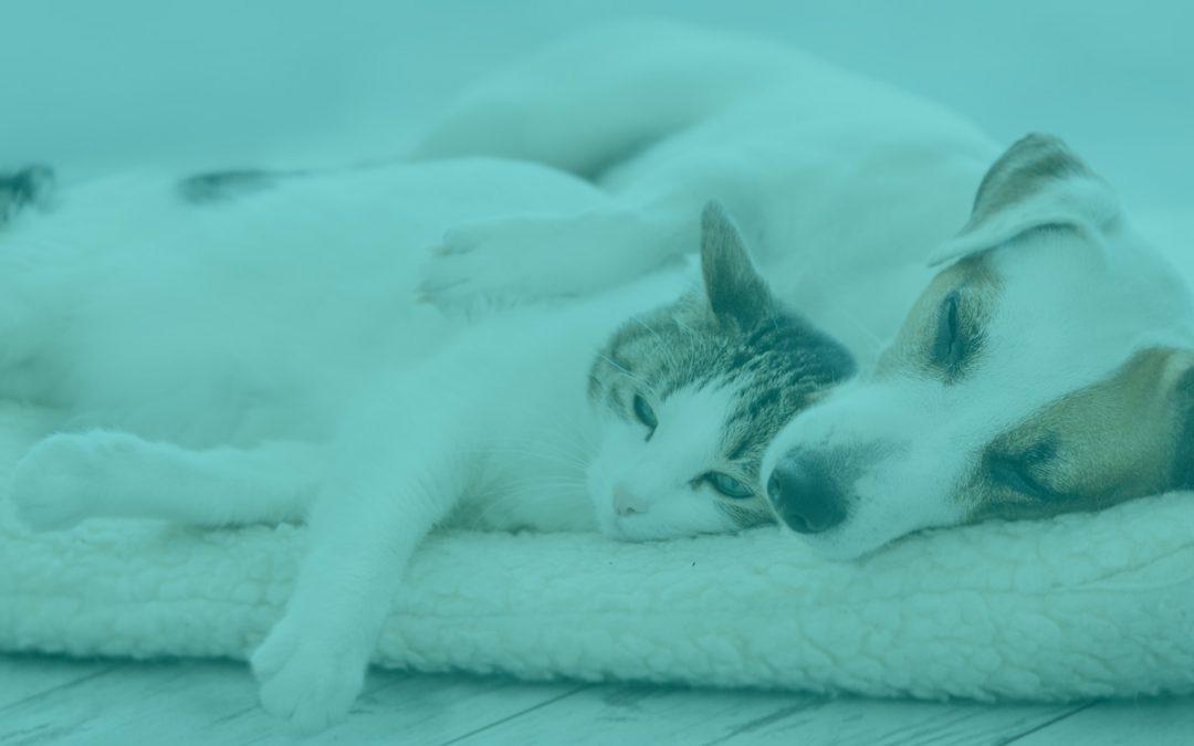 Best Mates Members – Win a Pet Portrait!