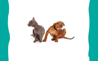 Protect your pet from Ticks and Heartworm