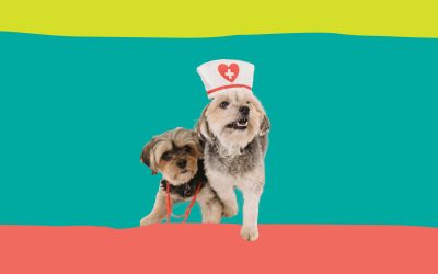 Happy International Vet Nurse Day!
